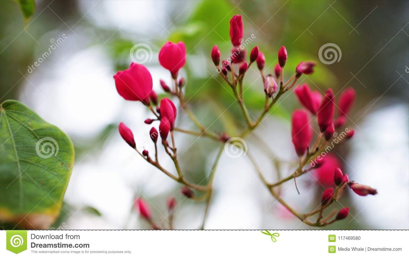 Small Pink Flowers Background Stock Plant With Small Pink Petals