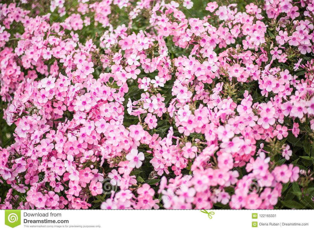 Small pink flowers on flower bed
