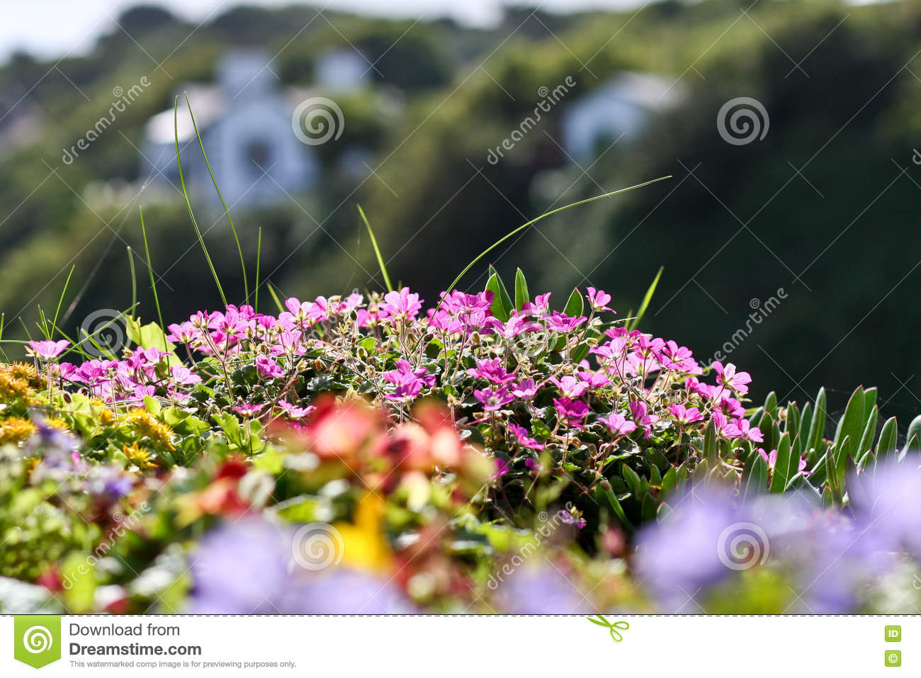 Small Pink Flowers Stock Image Image Of Meadow Summer 74563355