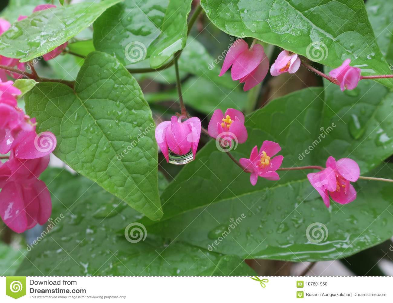 Small Pink Flower After The Rain Stock Photo Image Of Green Pink