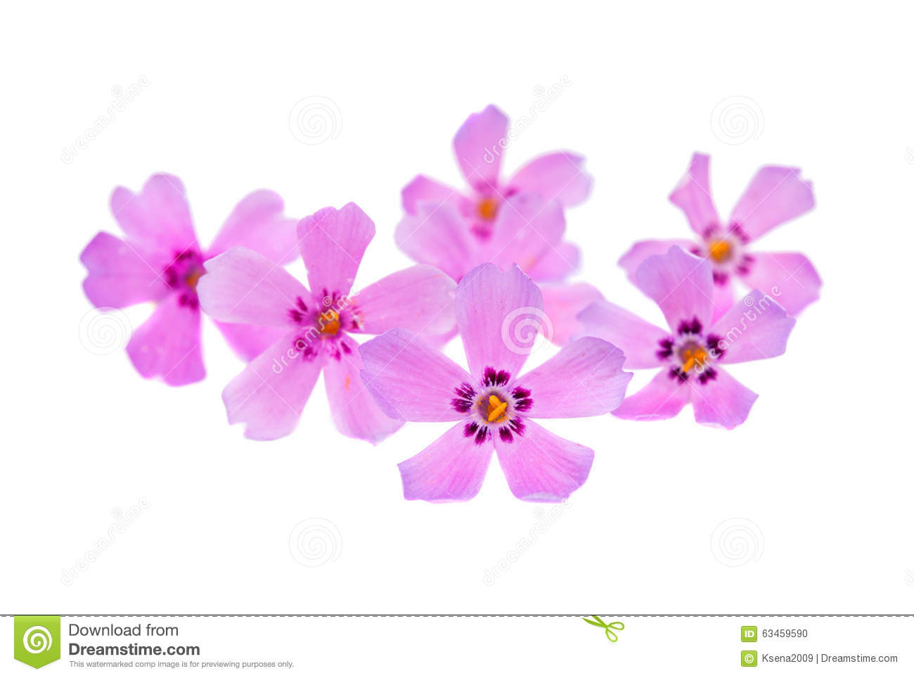 Small pink flowers stock photo image of perennial grass 63459590 download small pink flowers stock photo image of perennial grass 63459590 mightylinksfo