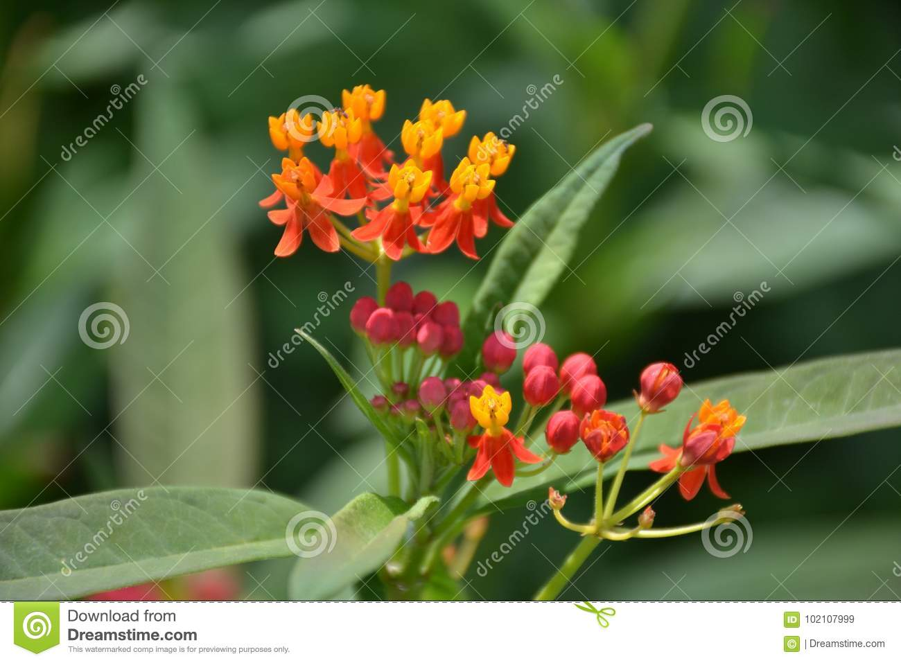 Small Pink And Orange Flowers With Leaves Stock Image Image Of