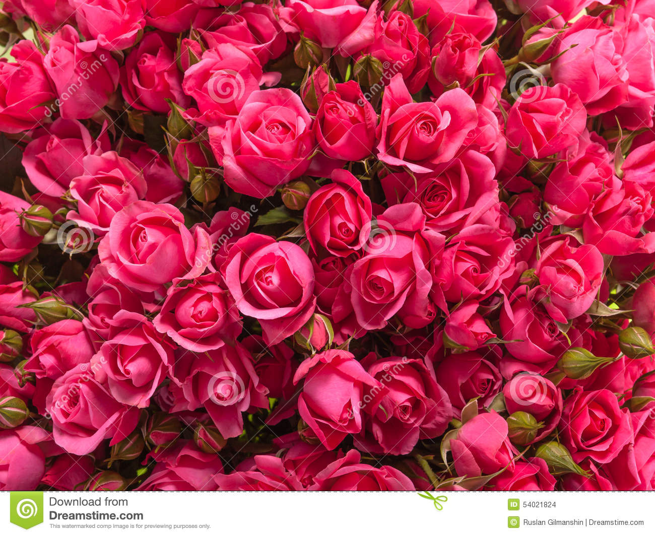 Small Red Rose Centerpiece : Small pink roses bouquet close up stock photo image