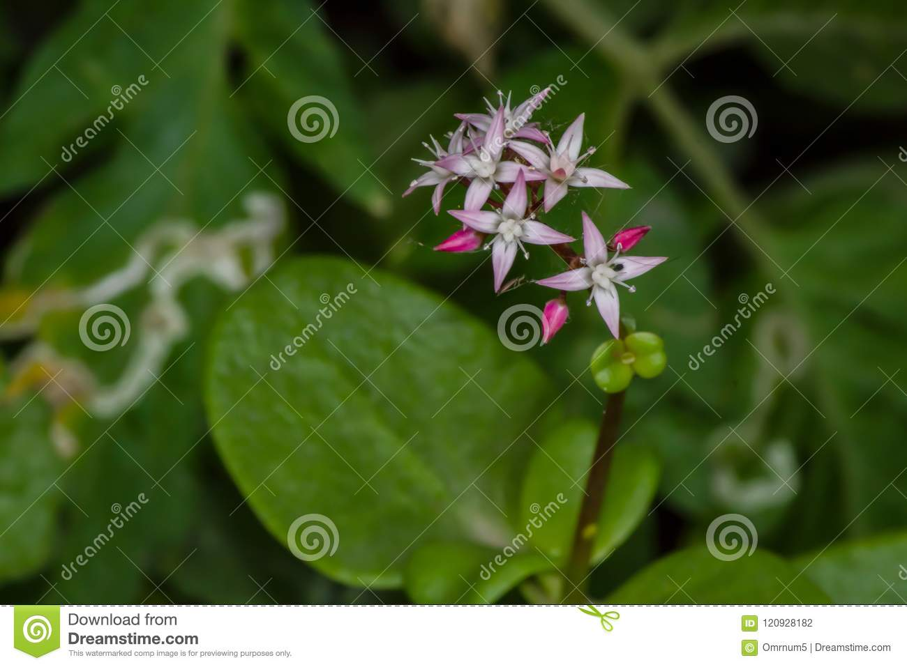 Small And Lonely Pink Flowers Stock Photo Image Of Sweet Pure