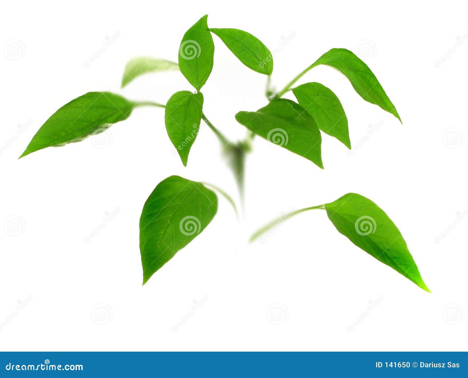 Small Plant Stock Photo Image 141650