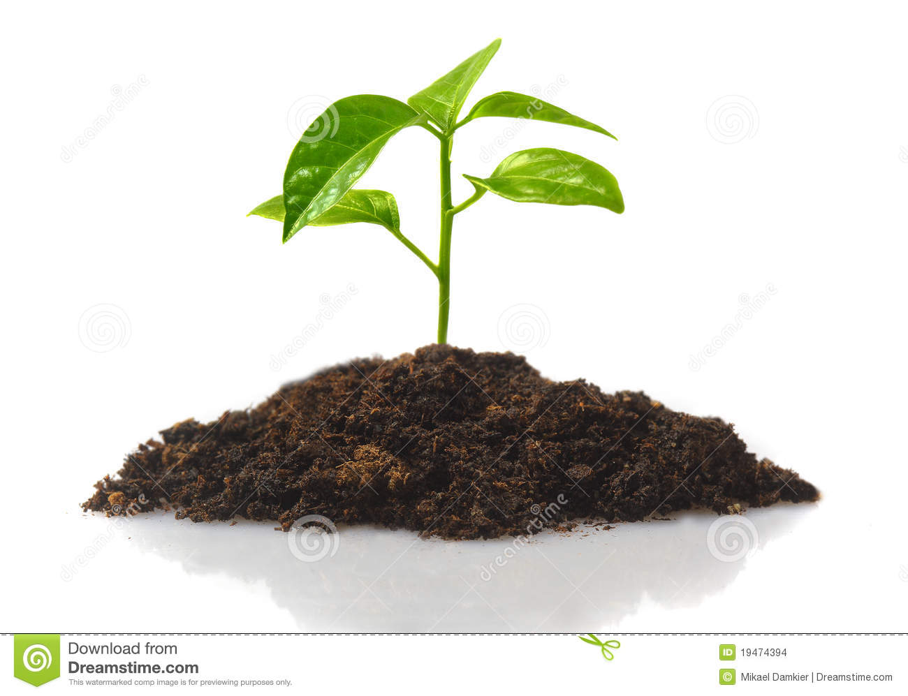 Small Plant Stock Photo Image Of Plant Ideas Leaf