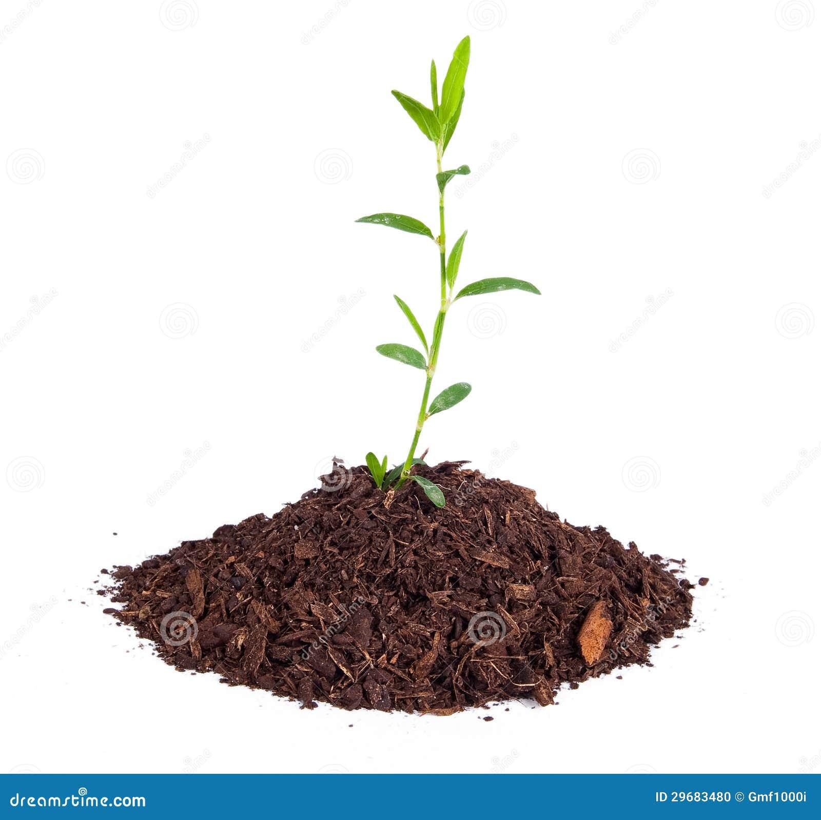 Small Plant Stock Photo Image 29683480