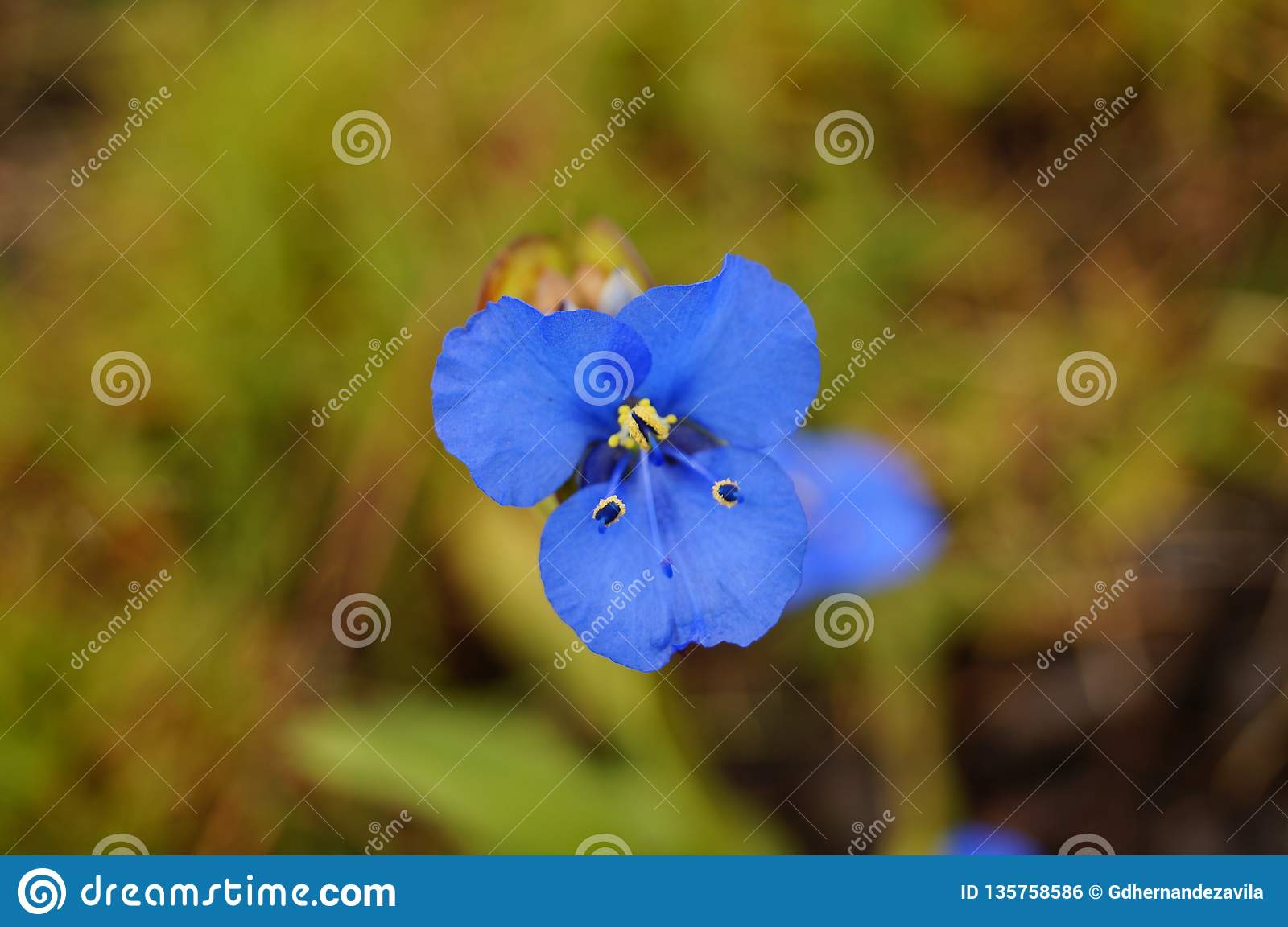 Small plant of blue petals shaped like a butterfly