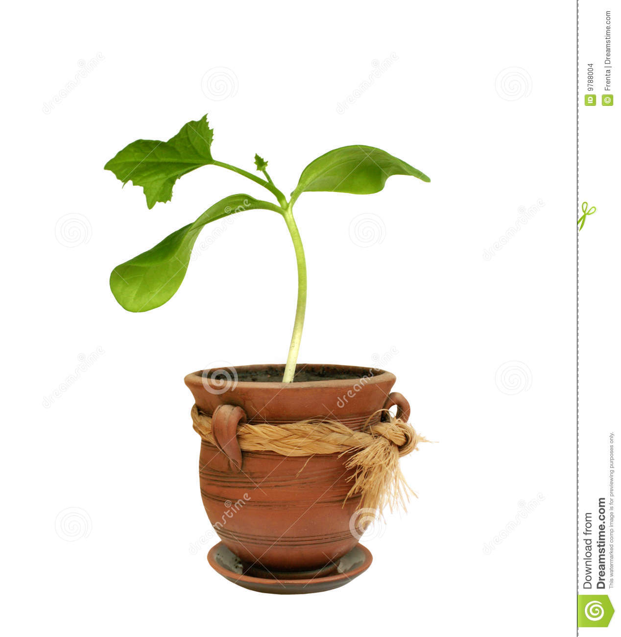 Small Plant In A Clay Pot Stock Photo Image Of Freshness