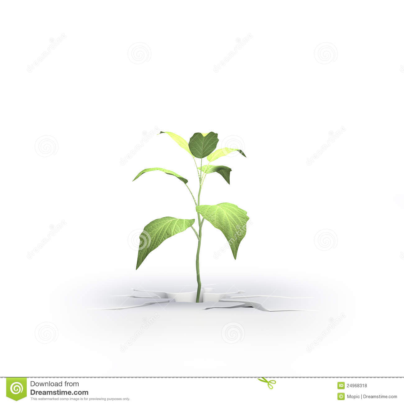 Flowers To Grow In Small Pots: Small Plant Growing From A Crack Royalty Free Stock Photos