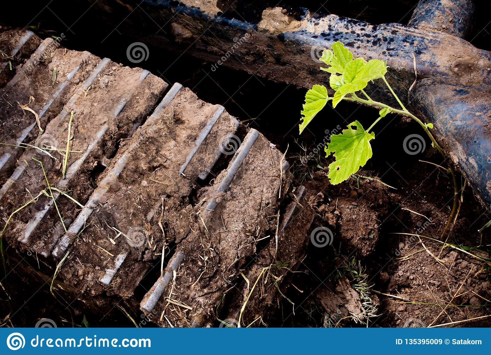 Small plant is hinder the track of excavator