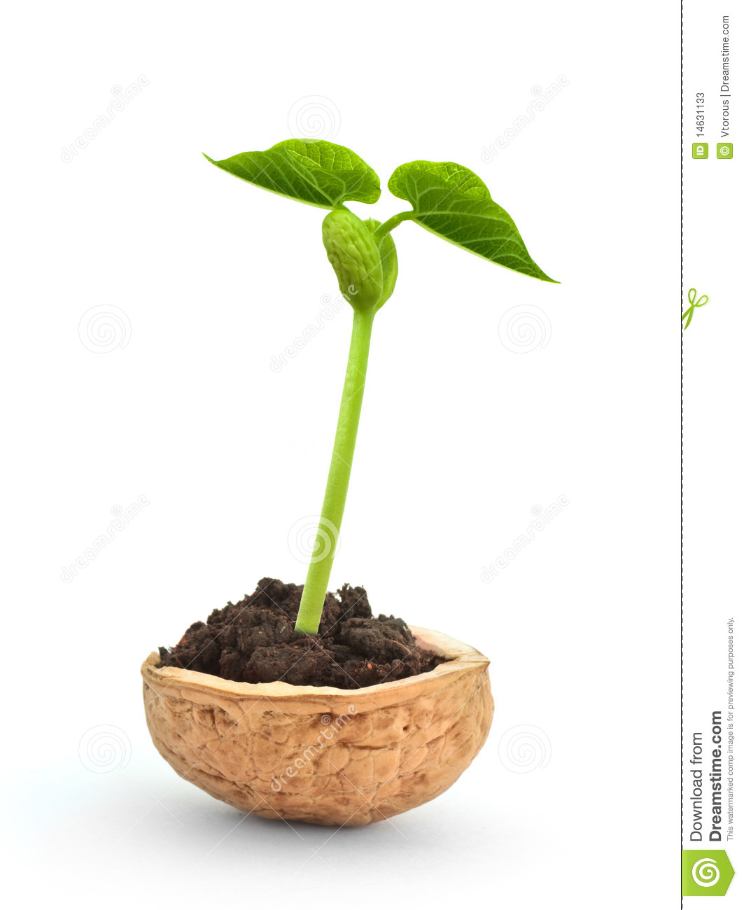 small plant in a nutshell stock photos image 14631133 125 cafeteria plan website of taxodace