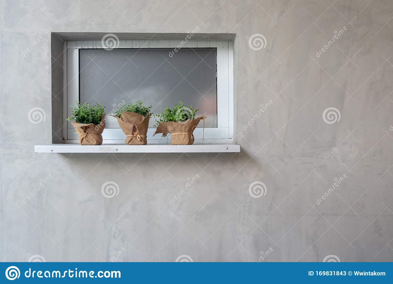 Small Plant In Pot On Counter Shelf With Concrete Wall Background Stock Image Image Of Indoor Flowerpot 169831843