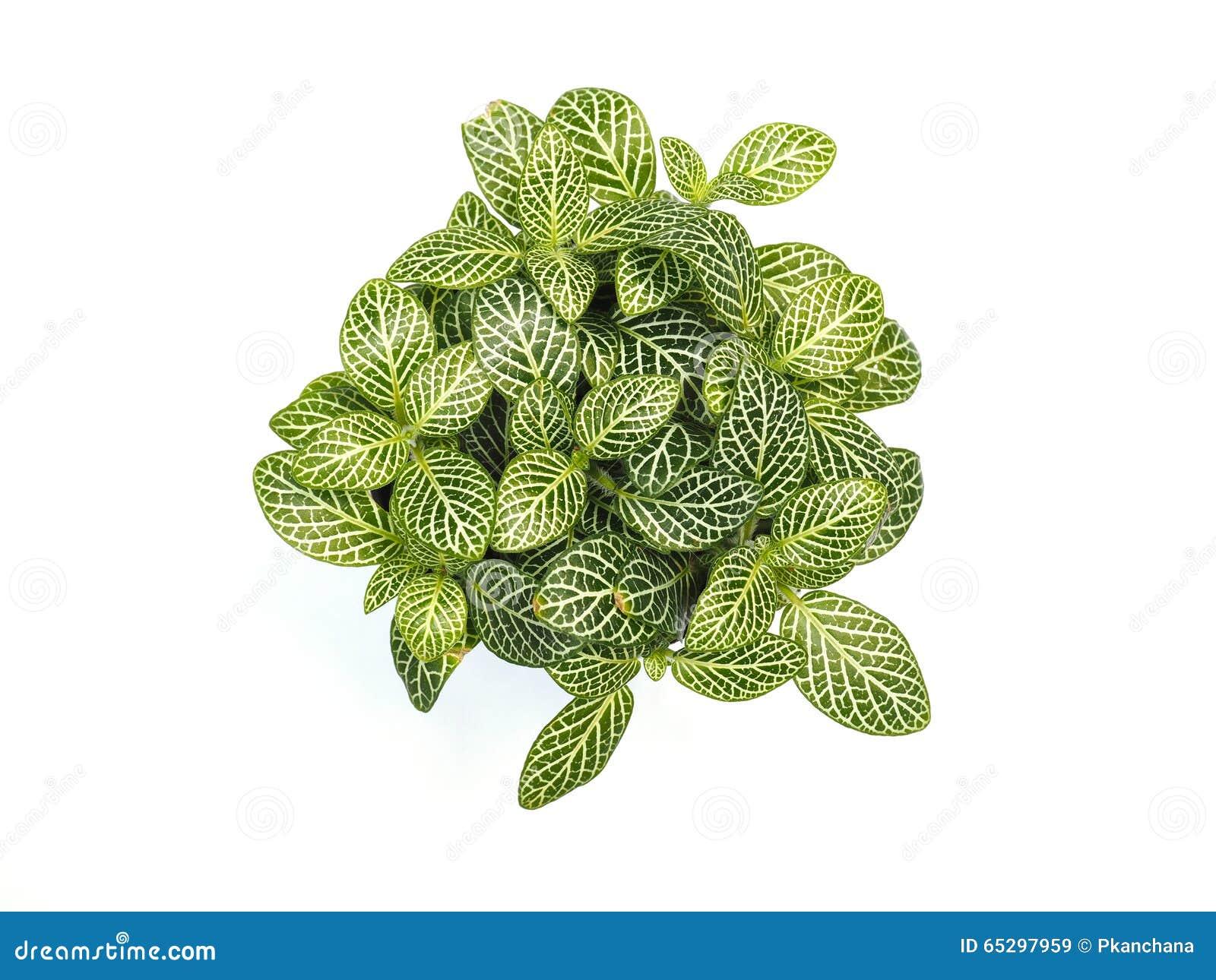 Small Plant Stock Image Image Of Flora Shot Studio