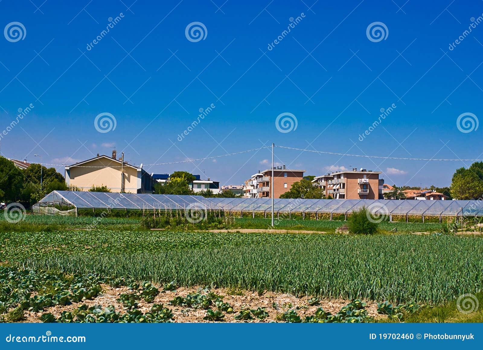 Small Plantation Stock Photo Image Of Vegetable