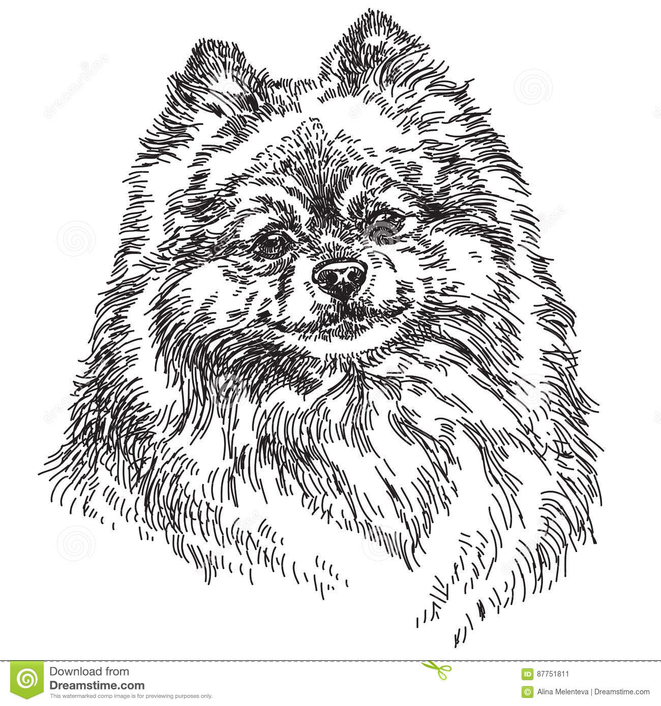 pomeranian vector pomeranian cartoons illustrations vector stock images 625