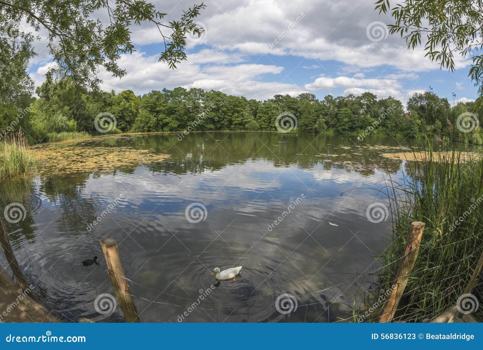 Hampstead heath london stock photo for Pond dealers