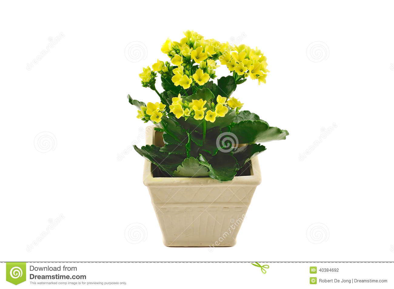 Small Pot With Yellow Flowers Stock Photo Image Of Botany