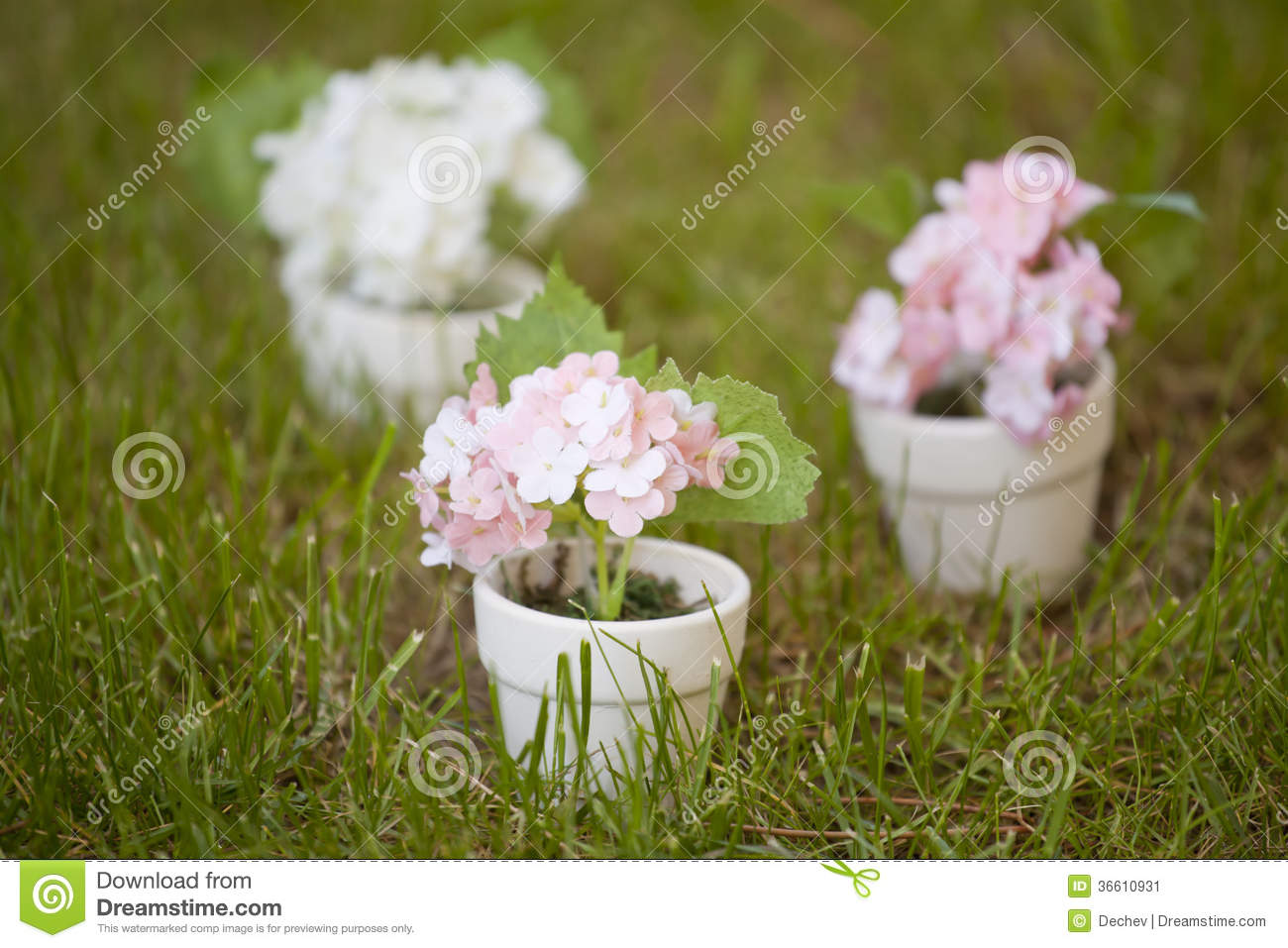 Small pots with flowers stock image image of meadow What are miniature plants grown in pots called