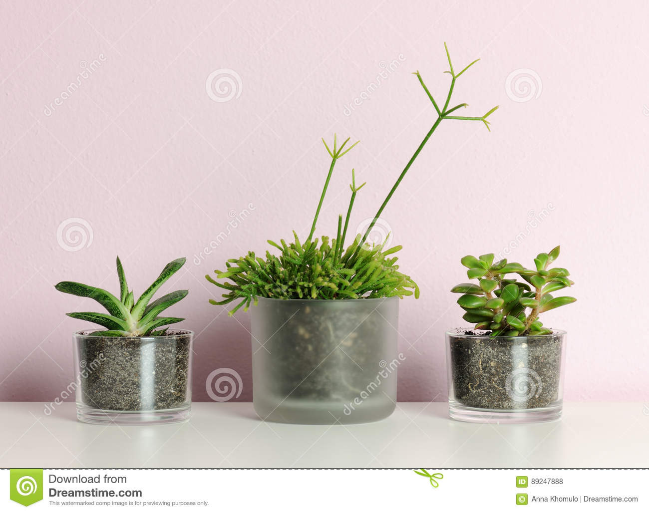 Pots With Small Palms On Blue Background Royalty Free