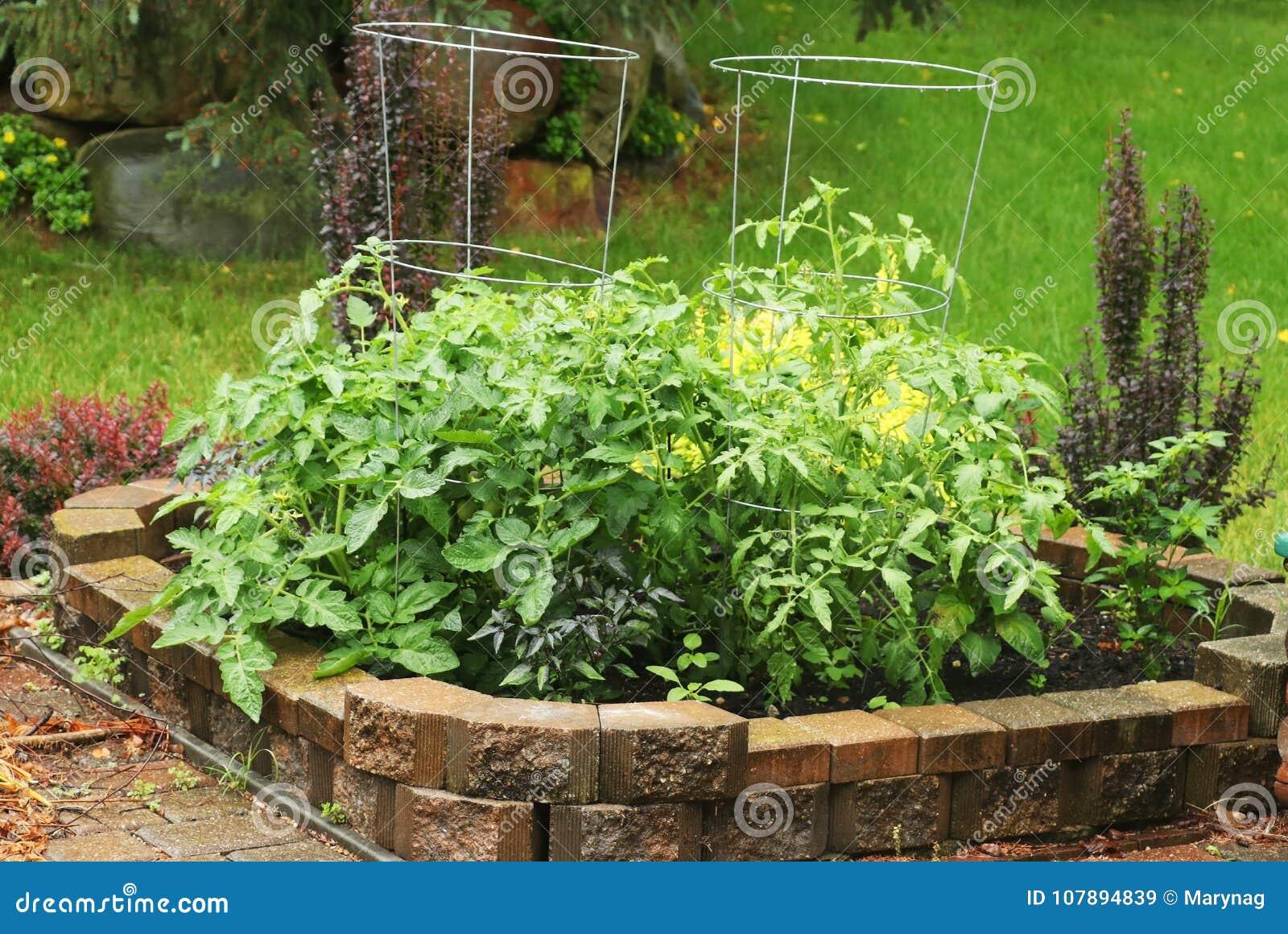 Small Private Backyard Vegetable Garden.