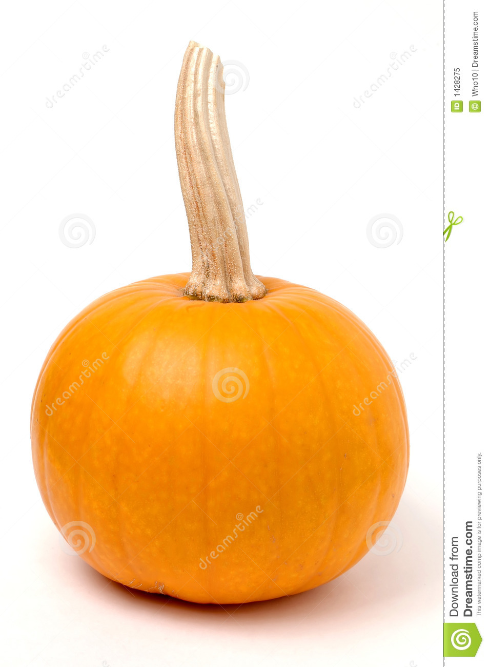 small pumpkin stock image image of festive market display 1428275