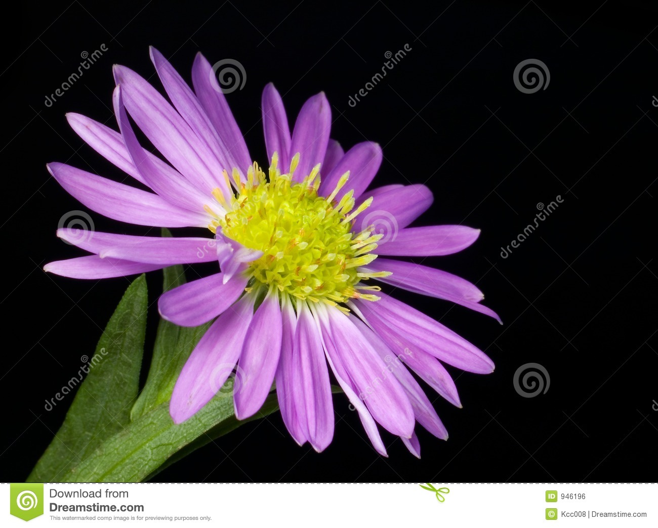 Small Purple Flower Royalty Free Stock Image Image 946196