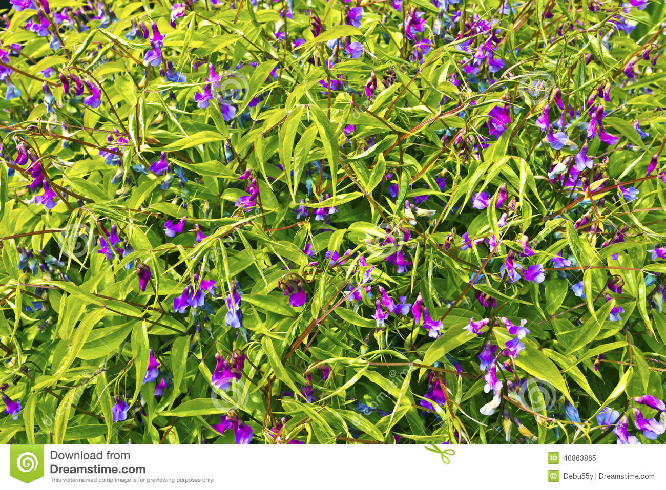 Small purple flowering plant close up stock image image of small purple flowering plant close up mightylinksfo Image collections