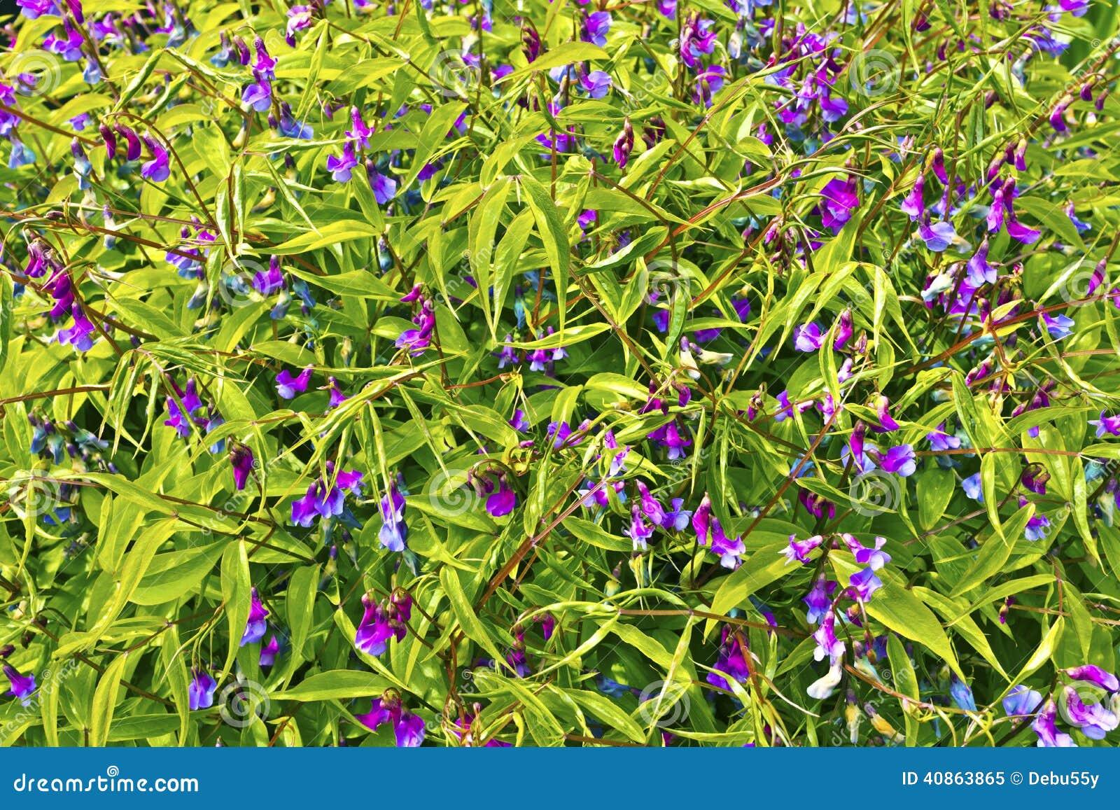 Small purple perennial flowers mightylinksfo