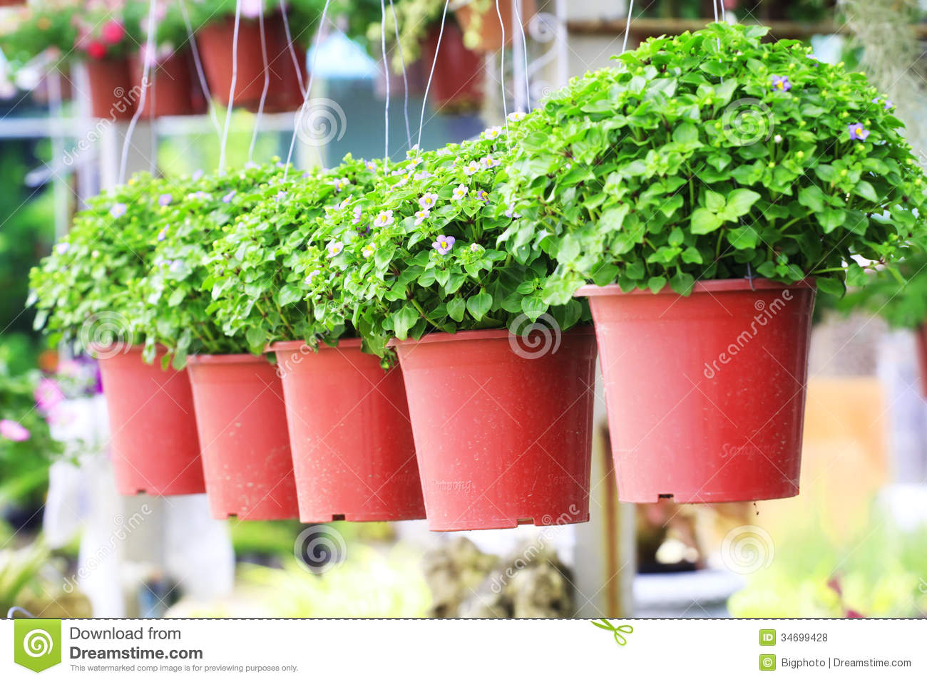 small purple flowers in a flower pot stock photo image 61797887