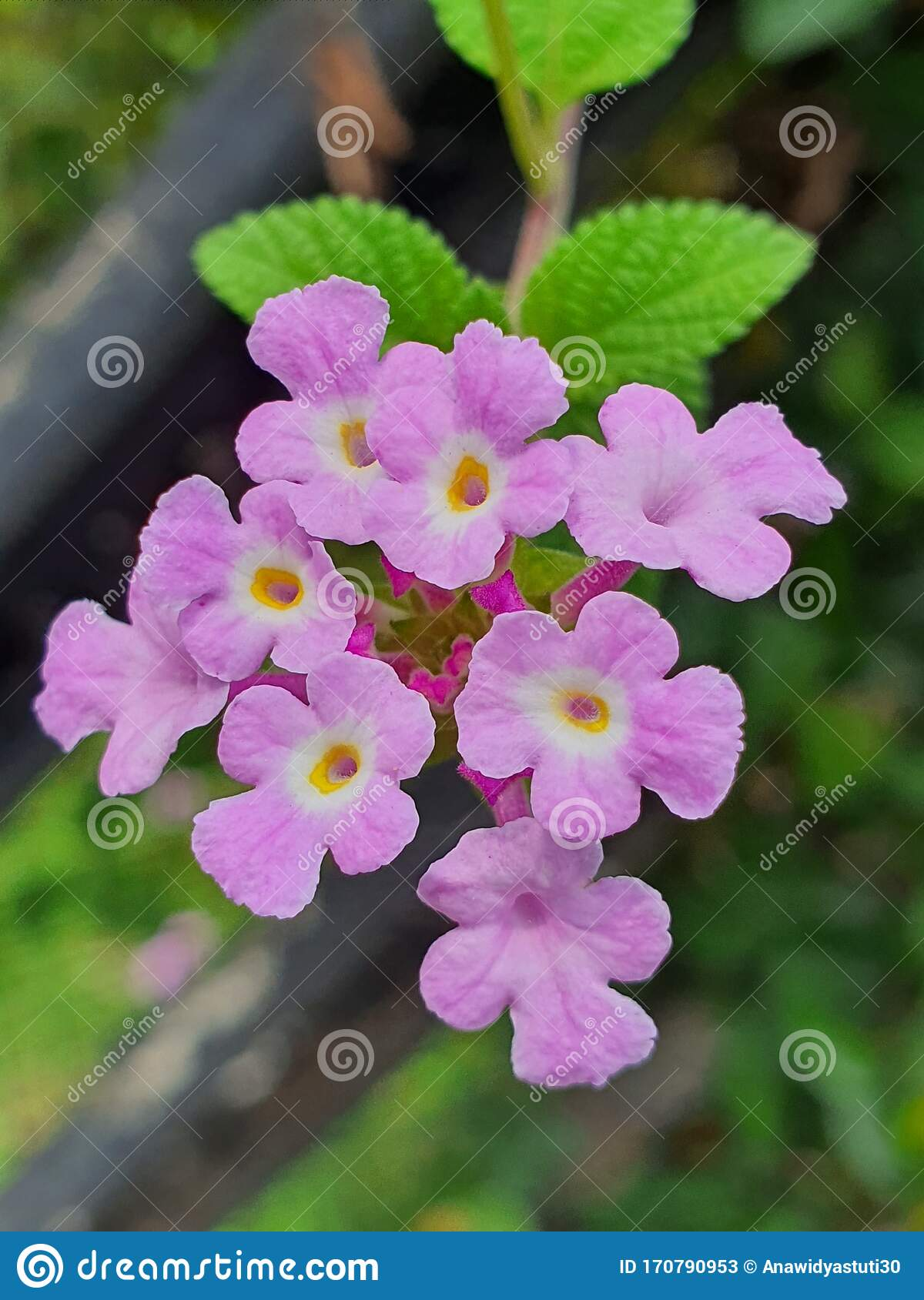 Small Purple Flowers In The Green Tree Stock Image Image Of