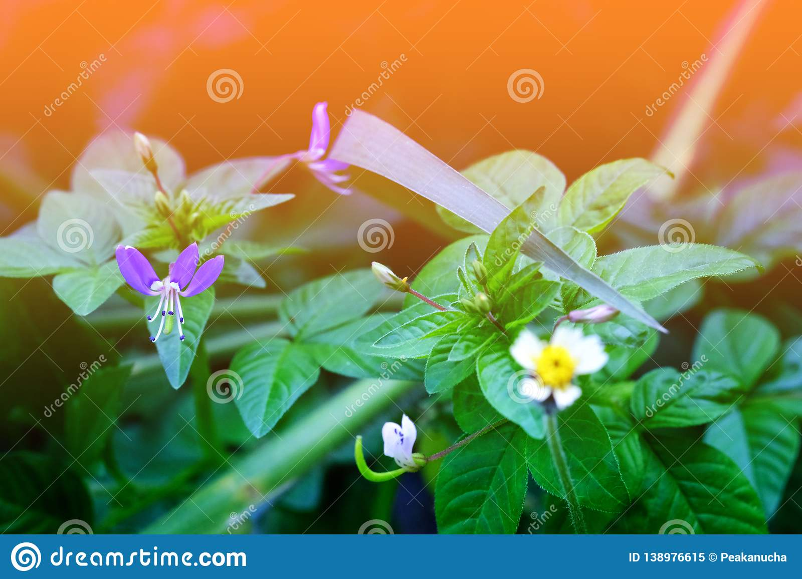 Small purple flowers Small white-yellow flowers. In my garden royalty free stock photo