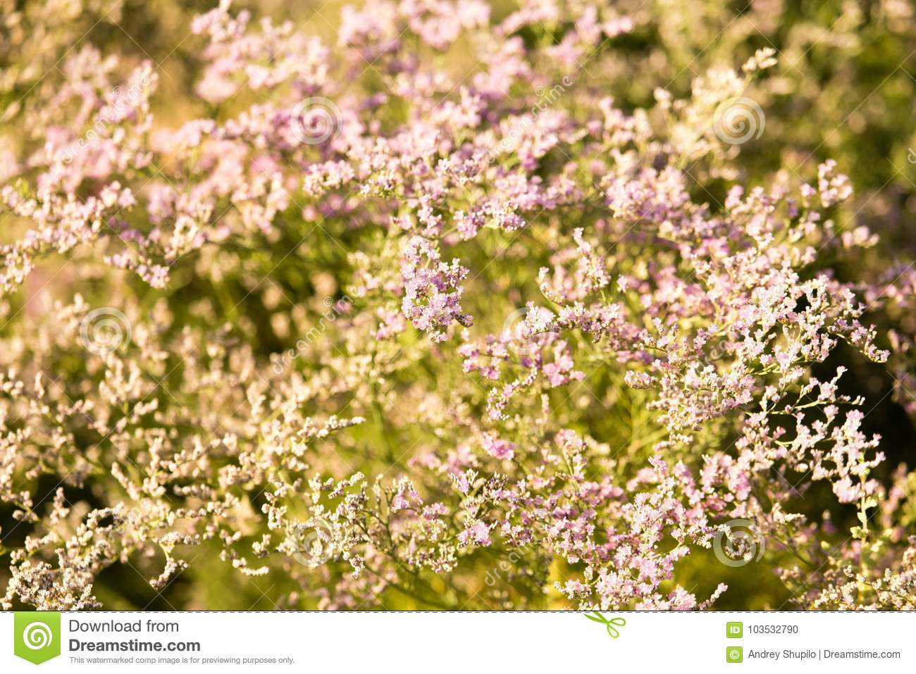 Small Purple Flowers On A Tree Stock Photo Image Of Field