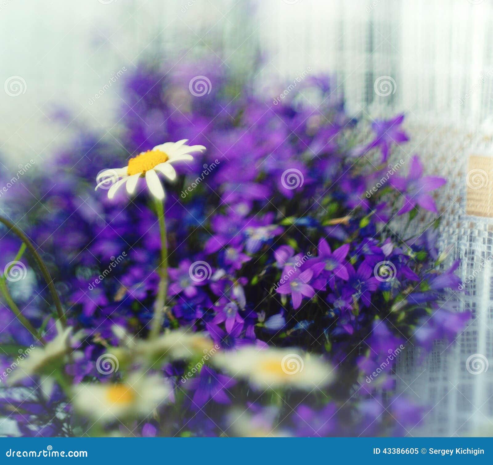 Small Purple Spring Wild Flowers Stock Image Image Of Fresh Blue