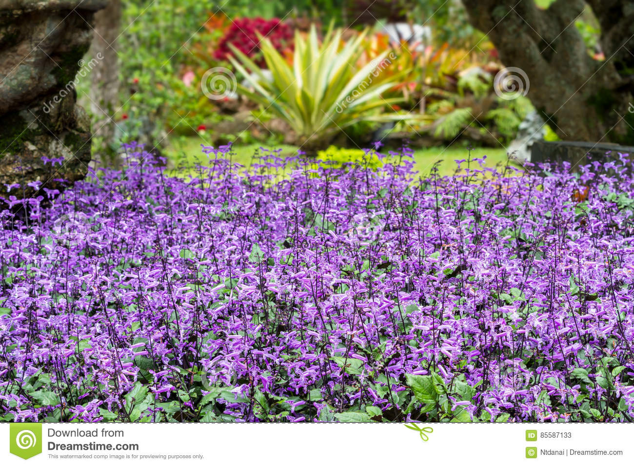 Small Purple And White Flowers Blossom Stock Image Image Of Summer