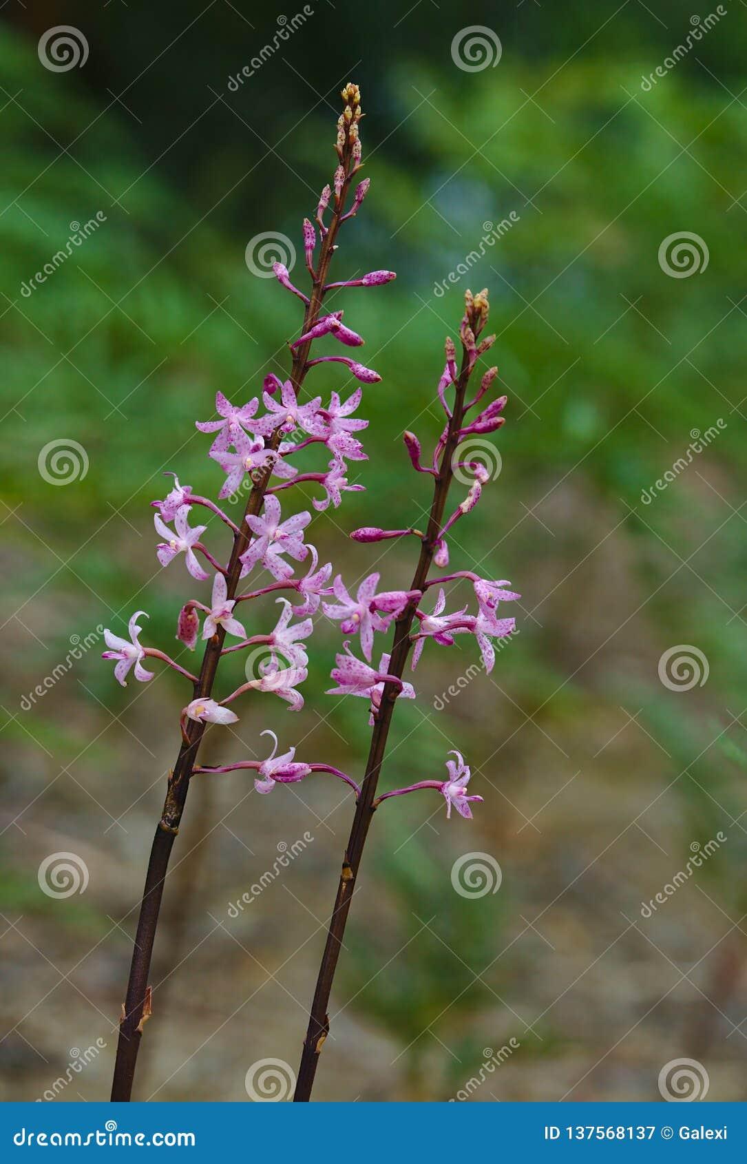 Small purple wild flowers
