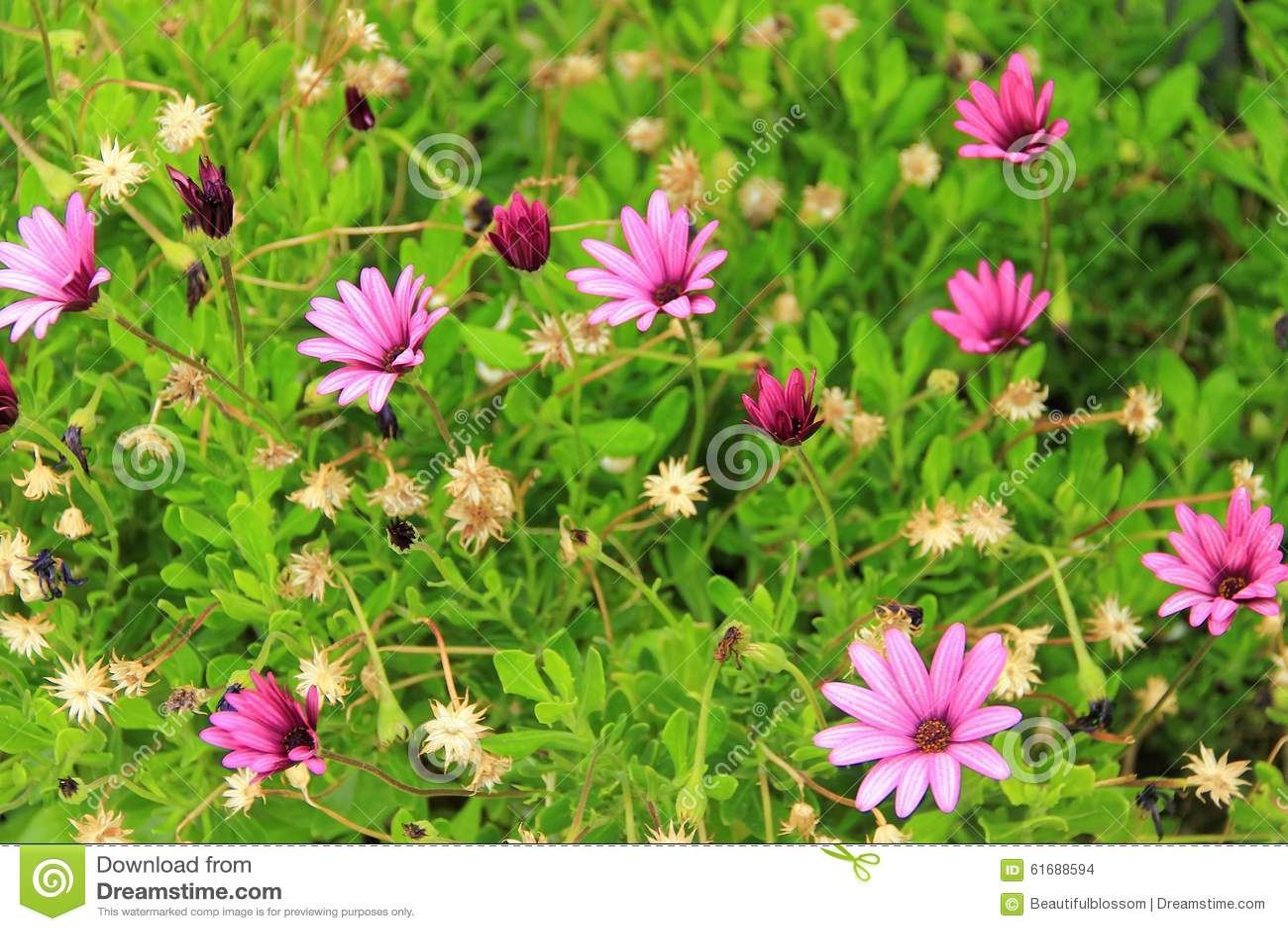 Small Purple Wild Flowers Stock Photo Image Of Meadow 61688594