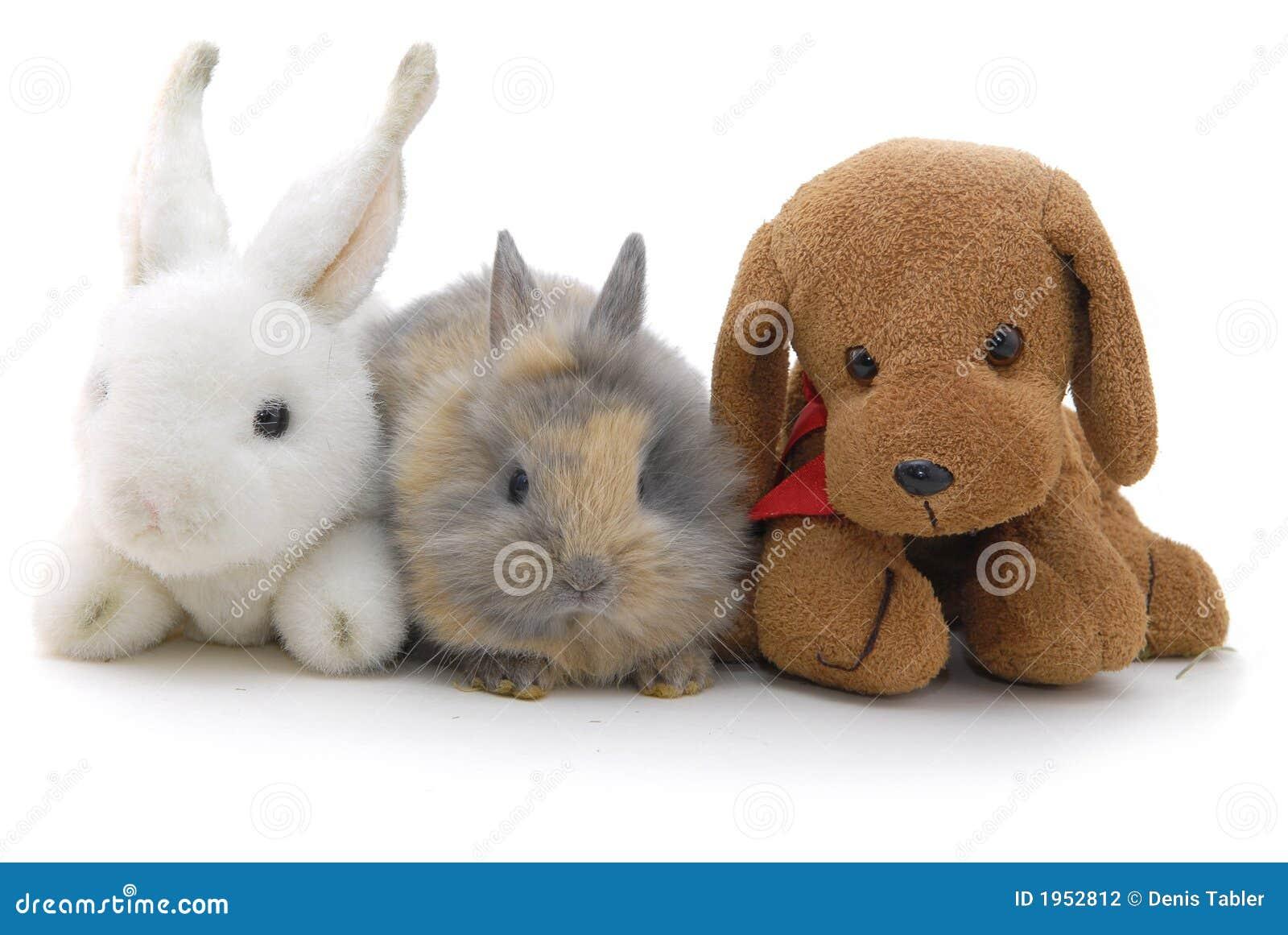 Small Toy Rabbits : Rabbit toys stock image cartoondealer