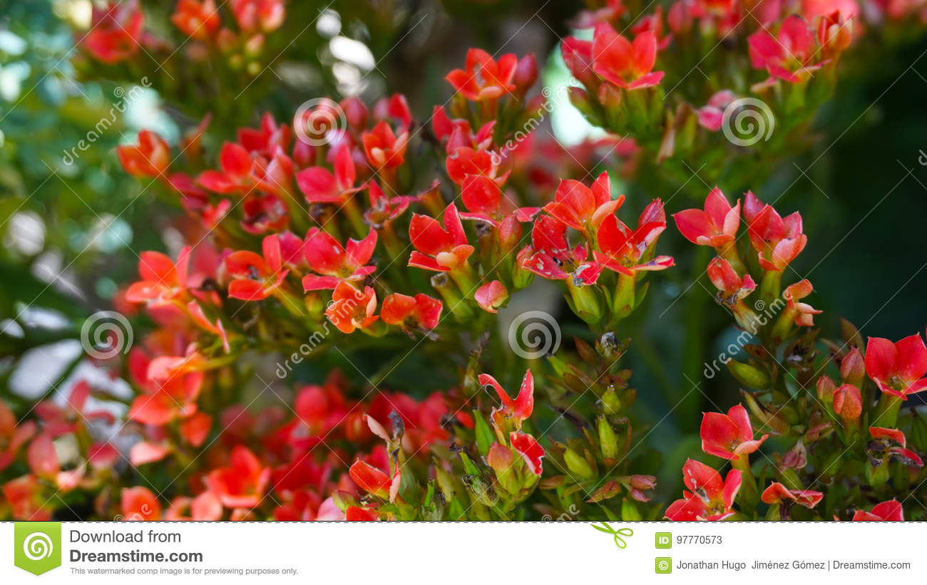 Small Red Flowers Stock Image Image Of Small Leaves 97770573