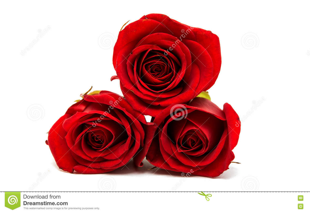 small red rose stock photo  image, Beautiful flower