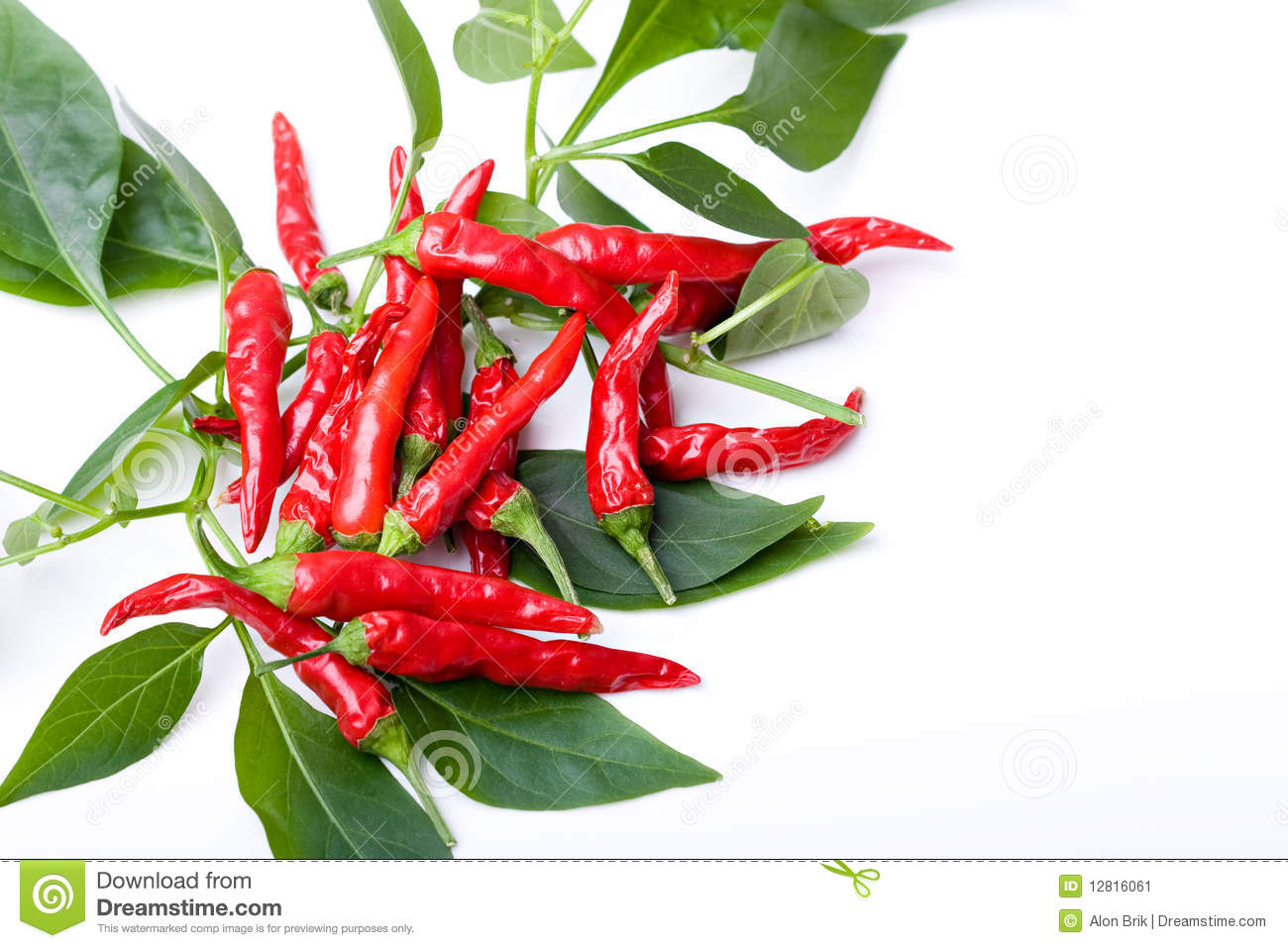 Small Red Spicy Hot Chili Peppers On Plant Leaves Stock ...