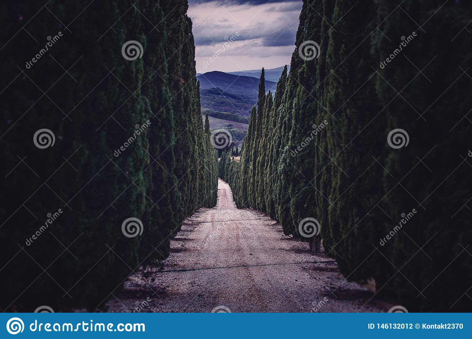 Alley with cypress-trees in Tuscany