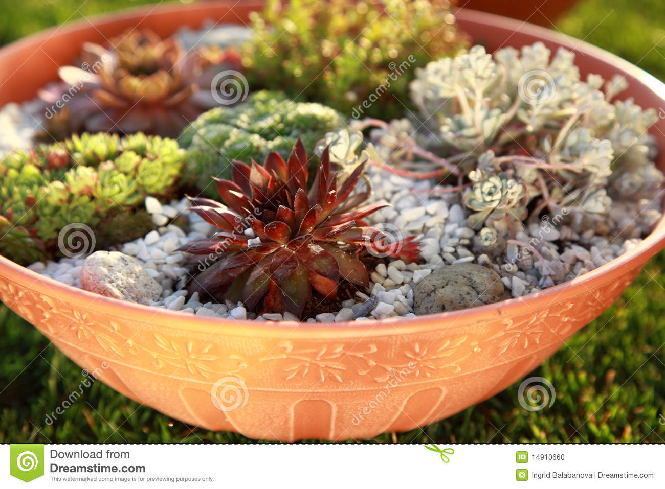 Small Rock Garden Stock Photo Image Of Alpine Balcony 14910660
