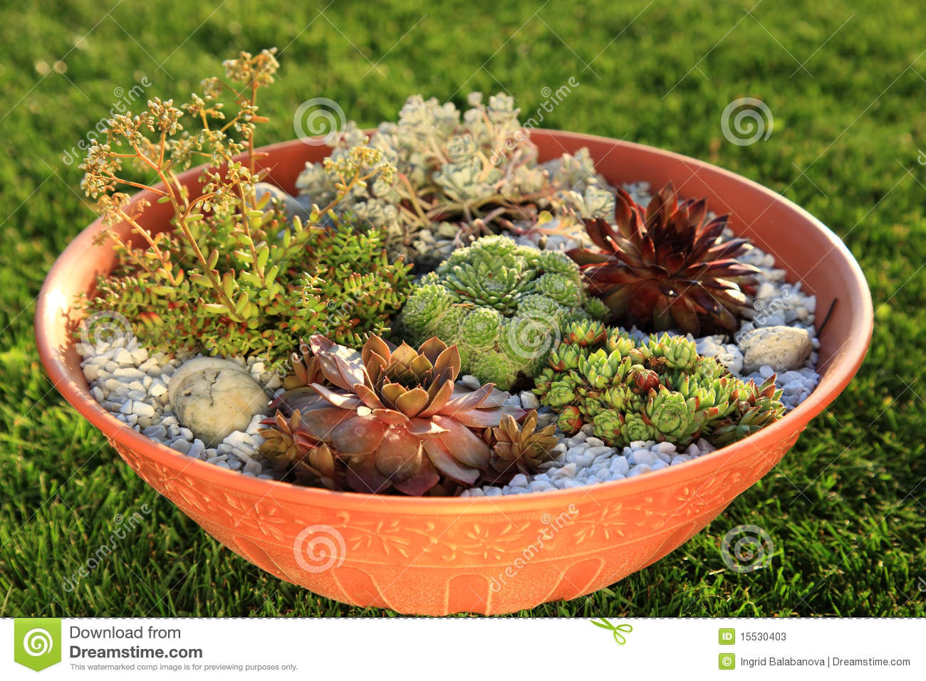 Small Rock Garden Stock Image Image Of Green Closeup