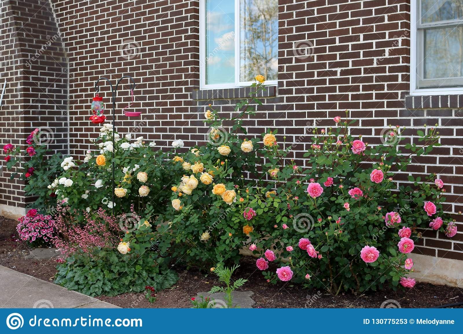 Small Rose Garden Stock Image Image Of Petals June 130775253