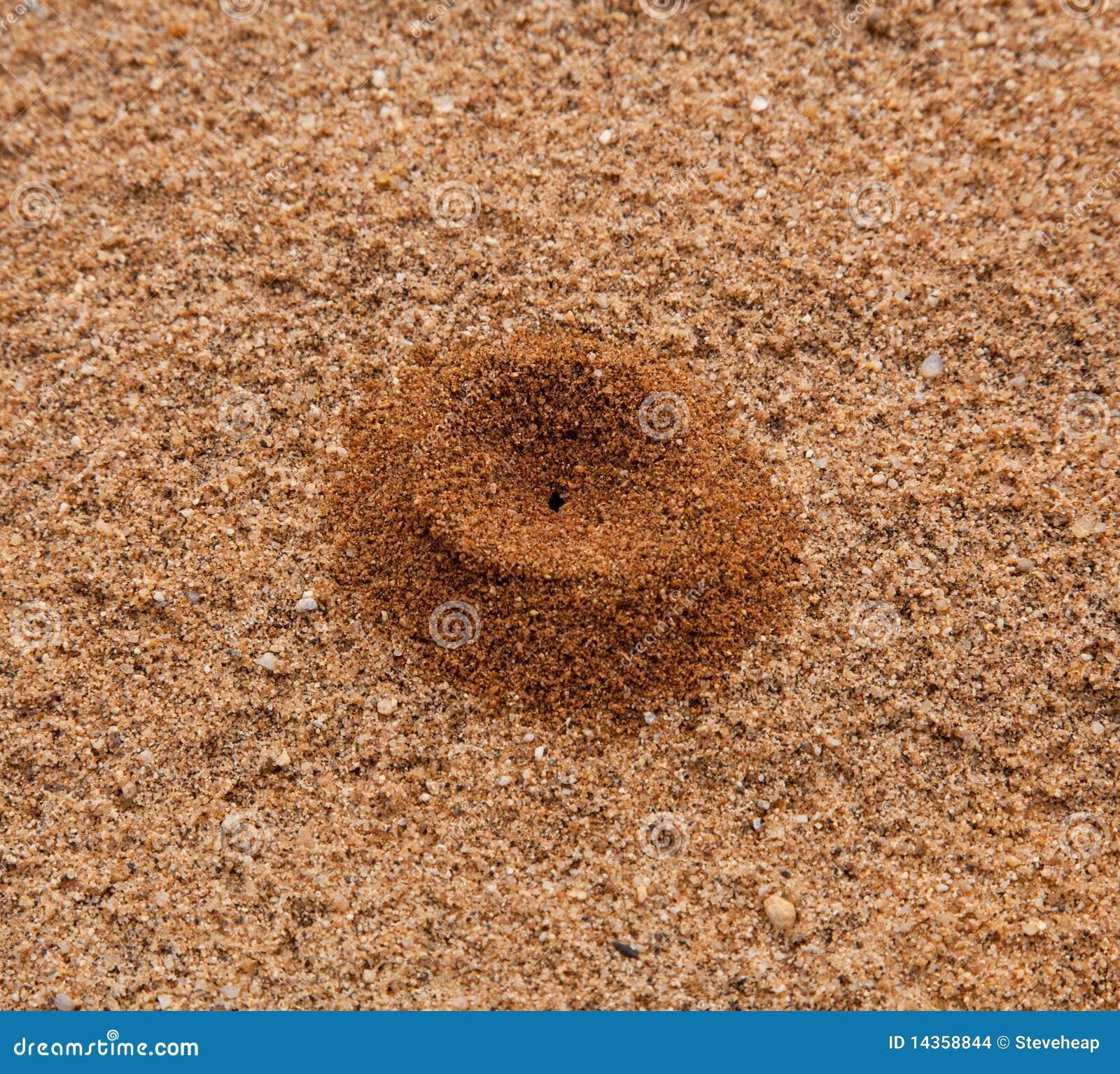 Pile of sand desert