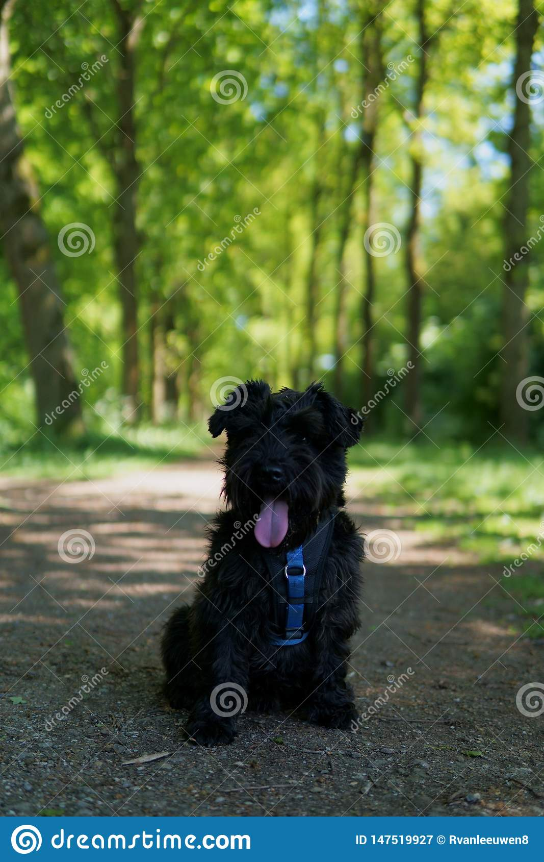 Small Schnauzer in a Forest