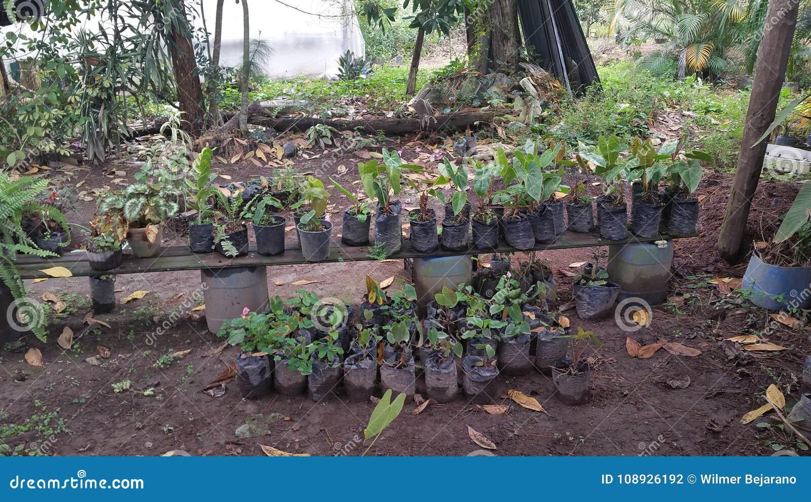 Nursery that lives - Siguatepeque Honduras