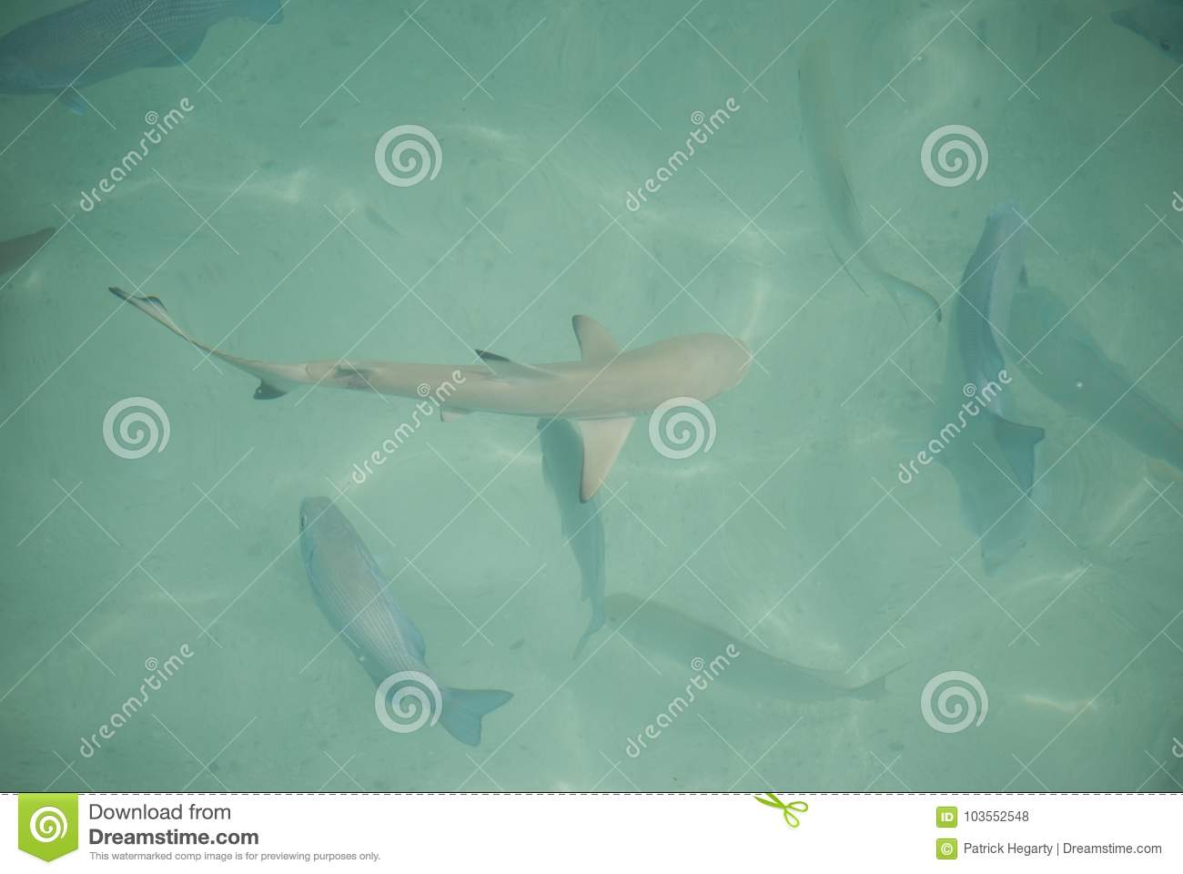 Small Shark Swimming With Fish Stock Photo - Image of seen