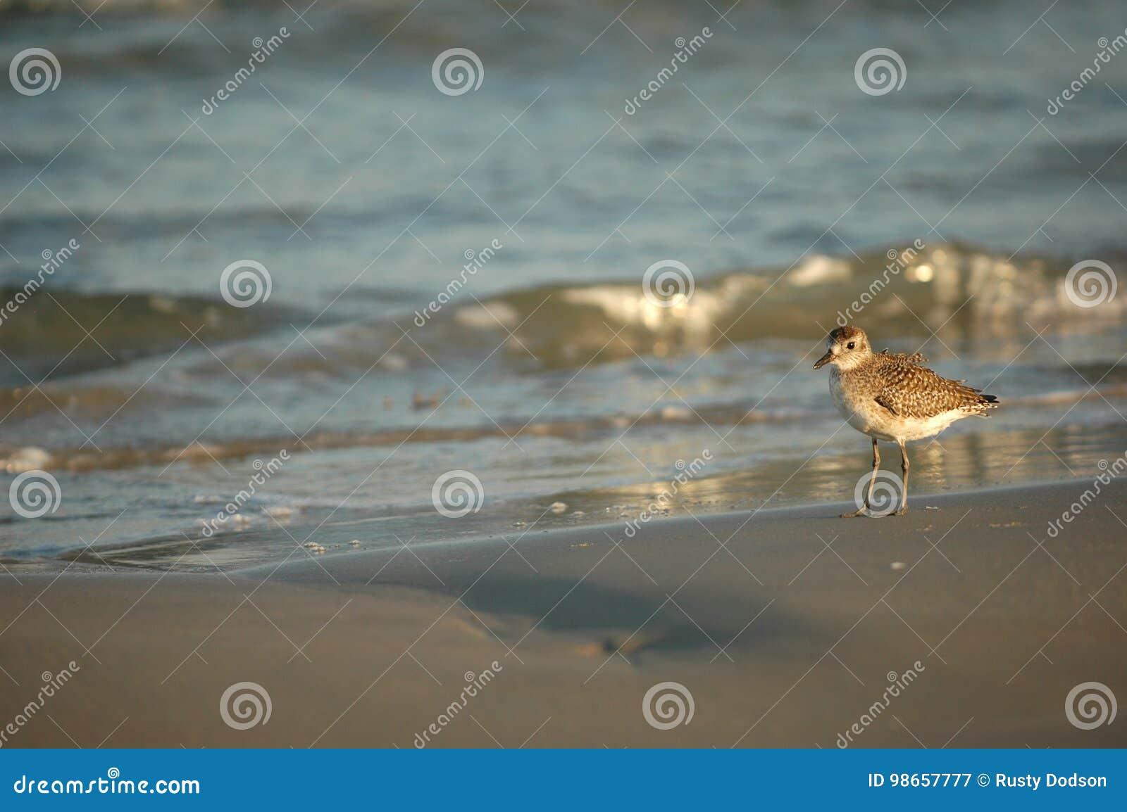 South Texas Birds